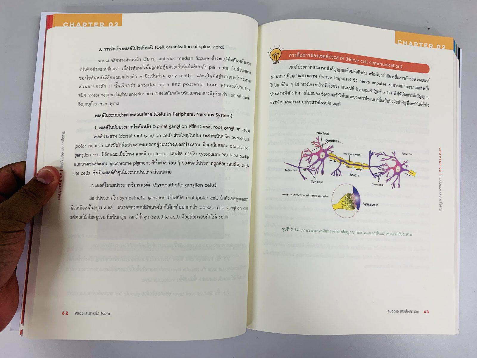 สมองและสารสื่อประสาท : ความผิดปกติในภาวะติดสารเสพติด